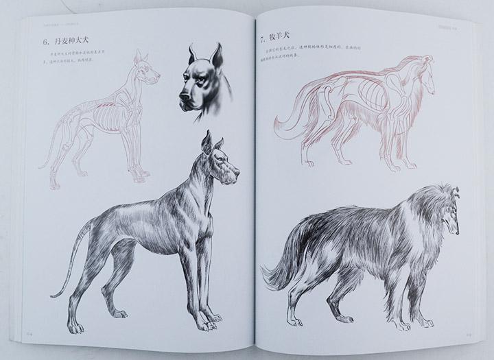 动物画表现技法