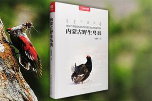 内蒙古野生鸟类-中国国家地理