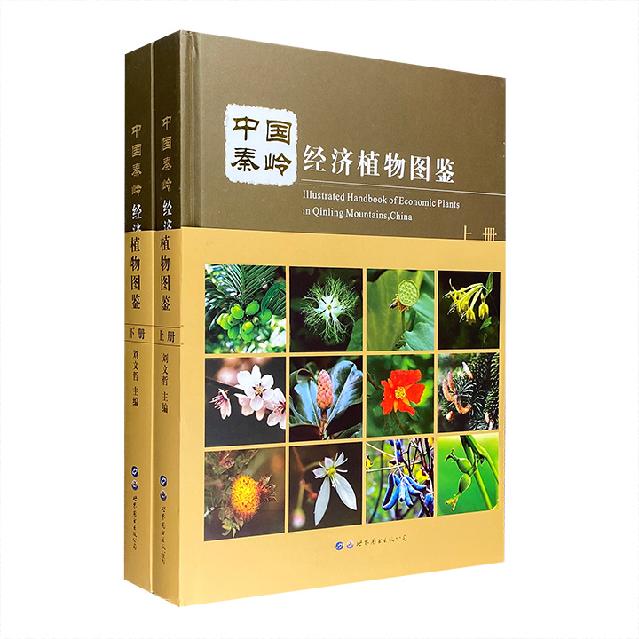 《中国秦岭经济植物图鉴》全两册,大16开精装,铜版纸全彩图文,收录我国秦岭近500种常见的经济植物种类,总达500余页,配有高清彩色图片1100余幅。所收植物包括野果植物、野菜植物、淀粉植物、油脂植物、芳香油植物、纤维植物、农药植物等十大类,所载内容包括植物的中文名、拉丁学名、别名、科属、形态特征、营养成分、采收加工等,全面反映了秦岭常见经济植物的生长分布、应用状况及开发研究情况。定价398元,现团购价76元包邮!